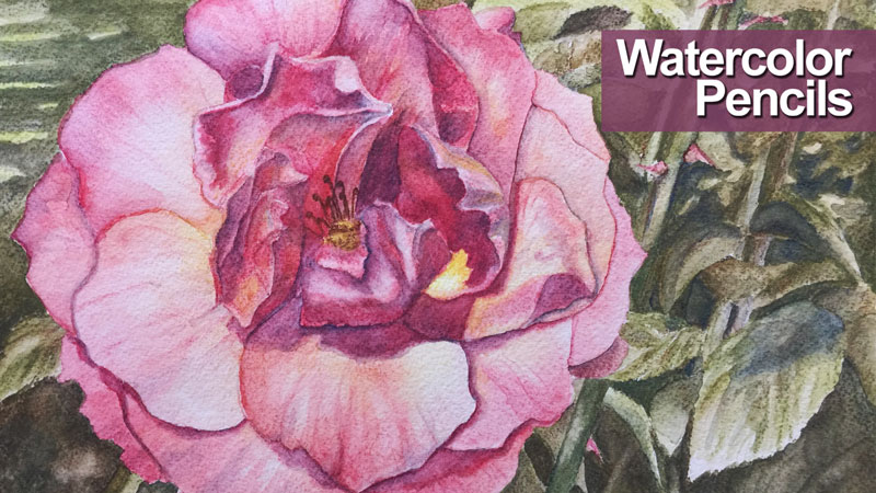 Watercolor Pencils Live Lesson Series