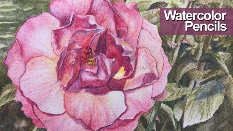 Watercolor Pencils Live Lesson Series