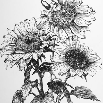 Pen and Ink Botanical Part 1
