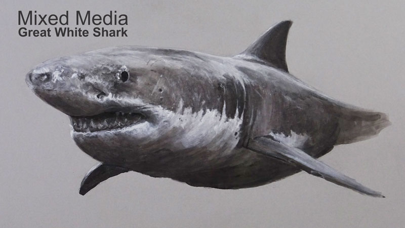 Mixed Media Drawing - Great White Shark