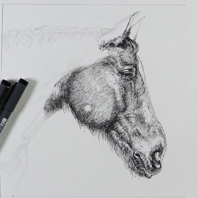Pen and Ink Horse