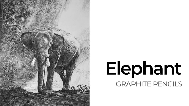 Elephant with Graphite Drawing Lesson Series