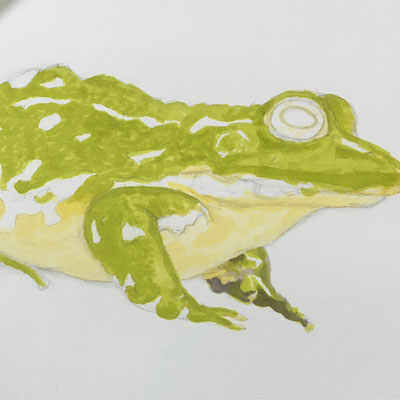 Colored pencils and markers - frog part 2