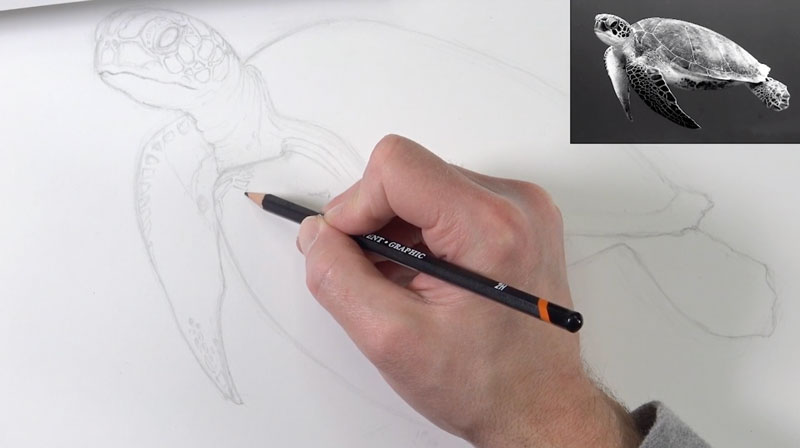 Pen and ink sea turtle lesson one - sketching the contours