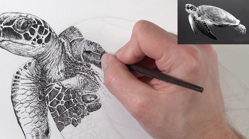Pen and ink sea turtle lesson 4 - hatching