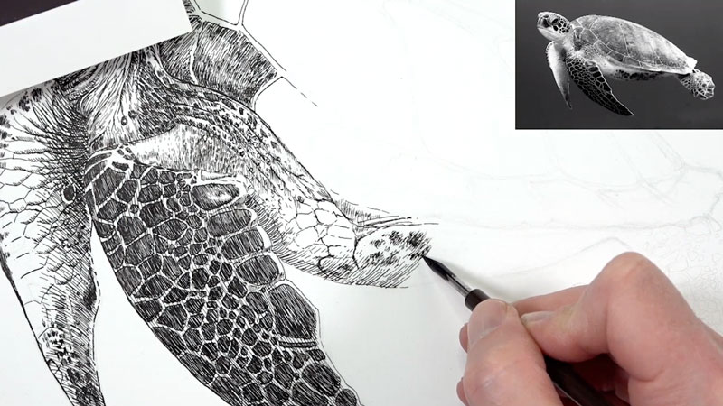 Pen and ink sea turtle lesson 5 - drawing the shell