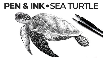 How to Draw a Sea Turtle with Pen and Ink