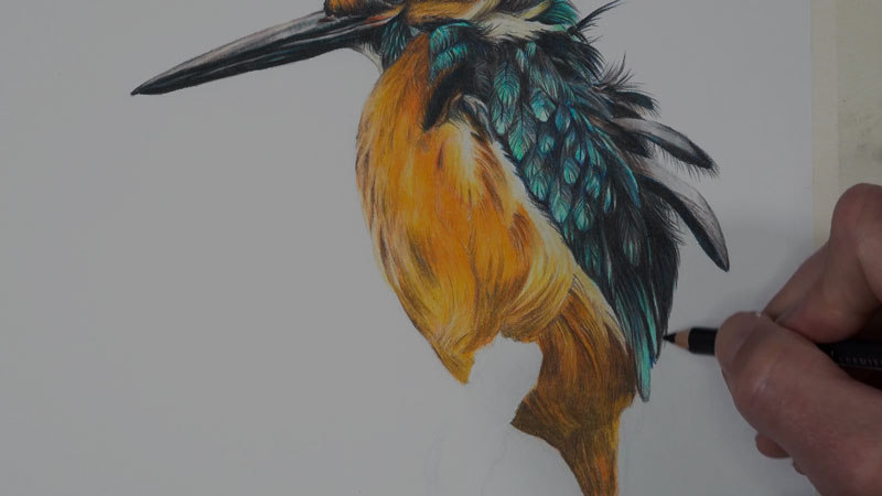 Kingfisher bird with colored pencils-lesson-3
