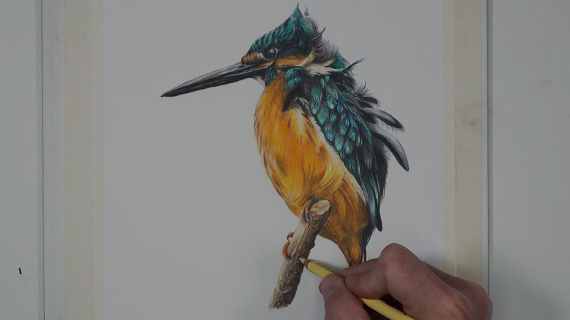 Kingfisher bird with colored pencils-lesson-4