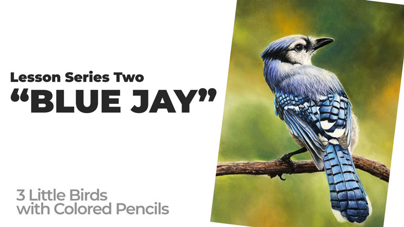 Recent Colored Pencil Lesson - Blue Jay