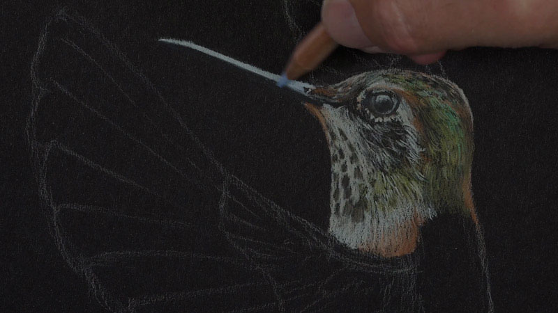Hummingbird with Luminance Colored Pencils Lesson 2