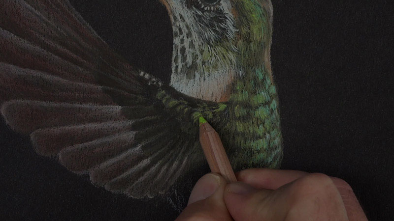 Hummingbird with Luminance Colored Pencils Lesson 3