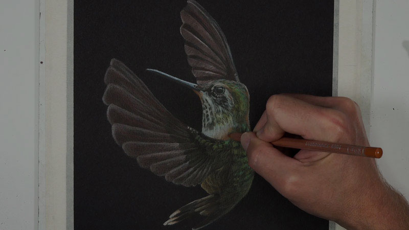 Hummingbird with Luminance Colored Pencils Lesson 4