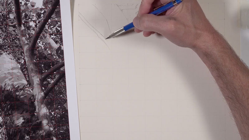 Graphite drawing tree lesson series - lesson 1