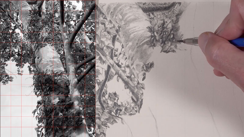 Graphite drawing tree lesson series - lesson 2 and 3
