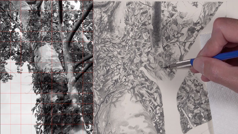 Graphite drawing tree - lessons 4-5