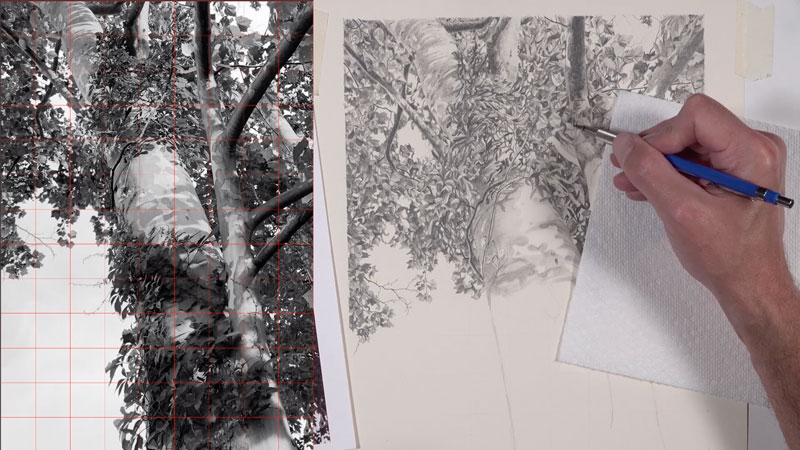 Graphite drawing tree lesson series - lessons 5-6