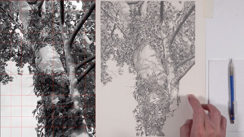 Graphite drawing tree lesson series - lessons 7-8