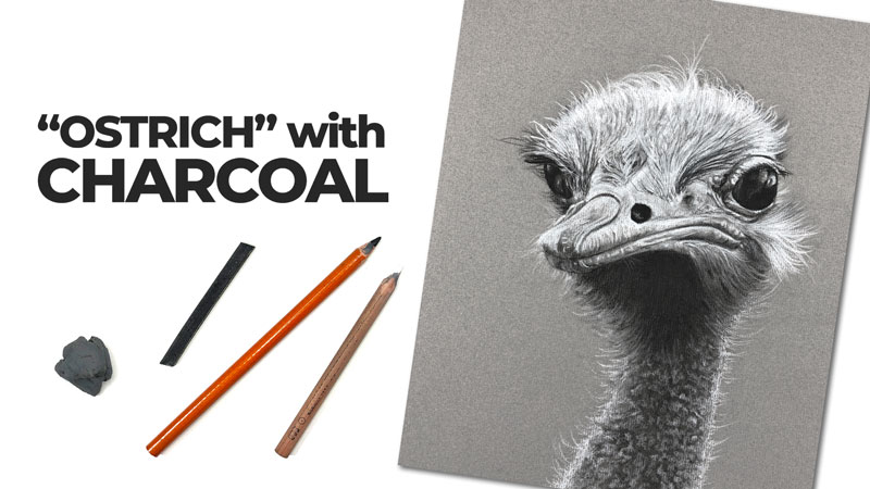 Ostrich Drawing with Charcoal