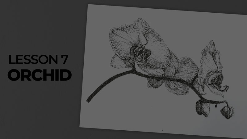 Subjects with ink - orchid