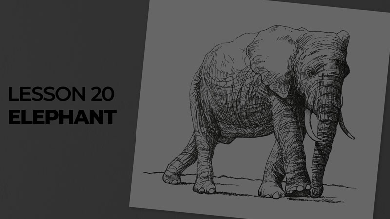 Subjects with ink - elephant