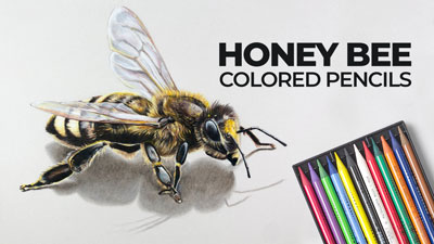 How to draw a bee with colored pencils