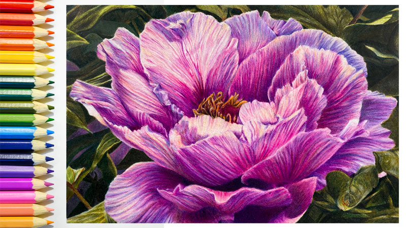 Recent Colored Pencil Lesson - Peony with Colored Pencils
