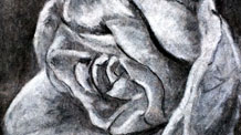 How to Draw a Rose with Charcoal