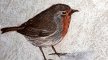 Conte drawing of a bird drawing lesson