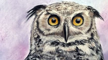 How to Draw An Owl with Pastel Pencils