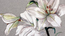 Pastel pencils still life lesson - Flowers