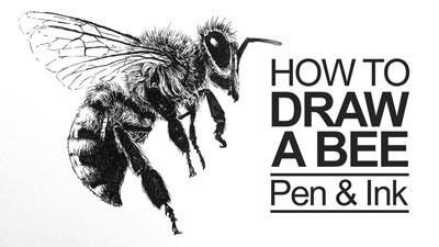 How to Draw a Bee with Pen and Ink