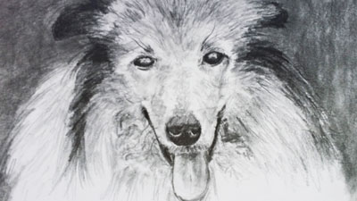 How to draw a dog with graphite - Live Lesson series