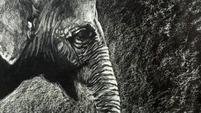 How to draw an elephant with white charcoal - lesson