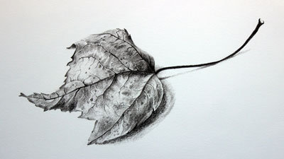 How to draw a realistic leaf with graphite pencils