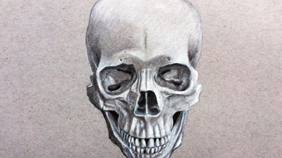 Portrait Drawing - The Skull Frontal View