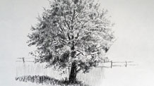 How to draw a realistic tree - Live Lesson